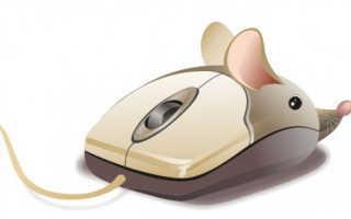 Почему не работает колесико у мышки: как исправить и что делать?