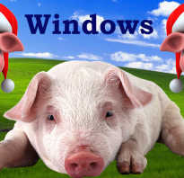 Windows XP: статьи сайта